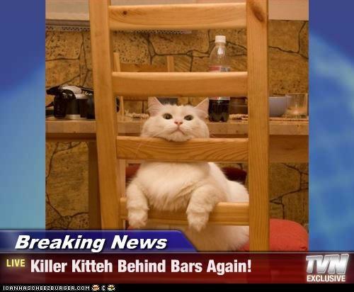 Breaking News - Killer Kitteh Behind Bars Again!