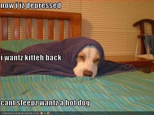 now i iz depressed i wantz kitteh back cant sleepz wantz a hot dog