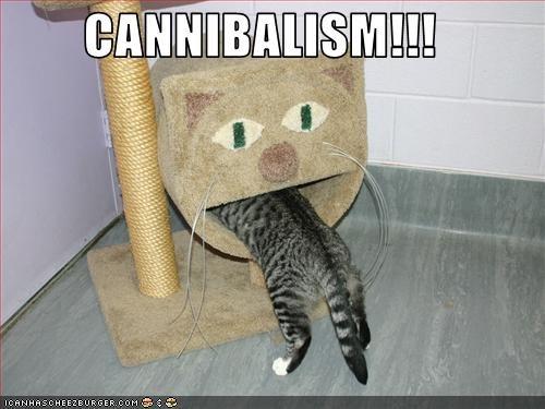 cannibalism,murder,nom nom nom,oh noes,scratching post