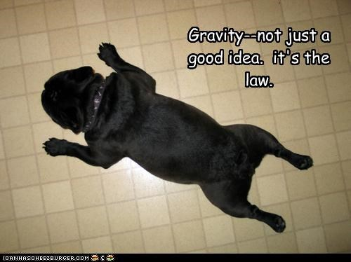 Gravity--not just a good idea.  it's the law.
