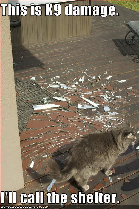 destruction,dogs,mess,shelter