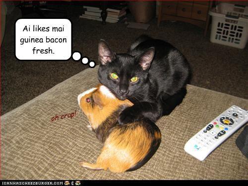 Ai likes mai guinea bacon fresh.