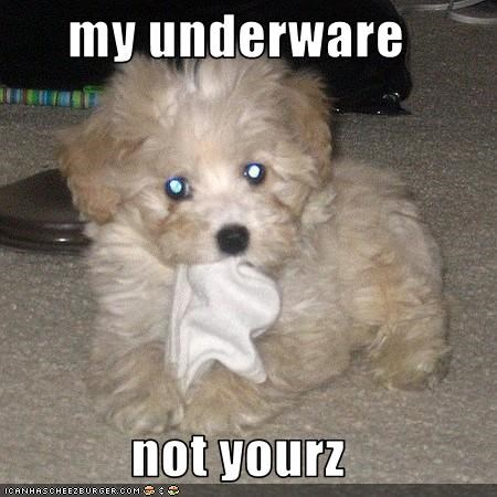 my underware  not yourz
