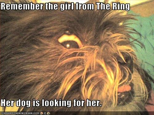 Remember the girl from The Ring  Her dog is looking for her.