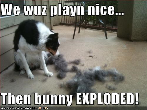We wuz playn nice...  Then bunny EXPLODED!