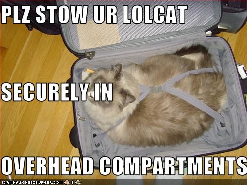 PLZ STOW UR LOLCAT SECURELY IN OVERHEAD COMPARTMENTS