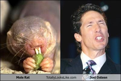 comparison of naked mole rat and Reverend Joel Osteen at totallylookslike.com