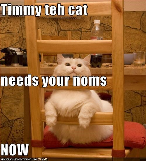 Timmy teh cat needs your noms NOW