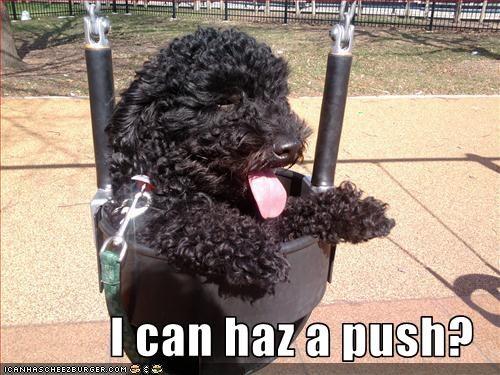 bichon frise,push,swing