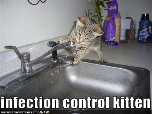 infection control kitten