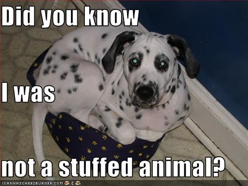 Did you know I was not a stuffed animal?
