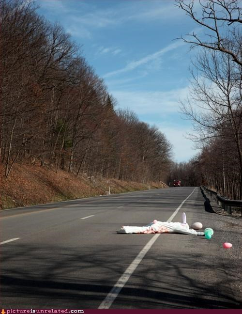 bunny,costume,easter,eggs,roadkill,wtf