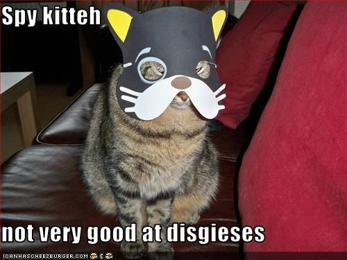 Spy kitteh  not very good at disgieses