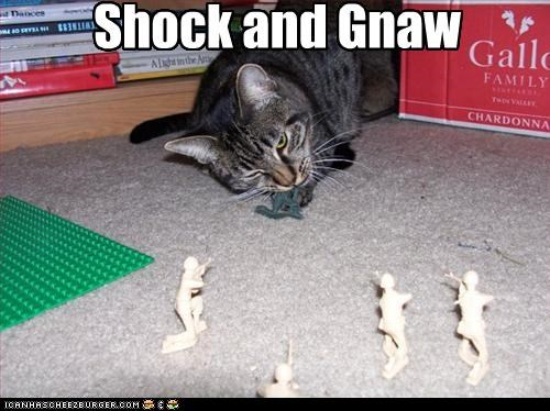 Shock and Gnaw