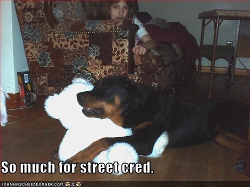 cuddle,rottweiler,teddy bear