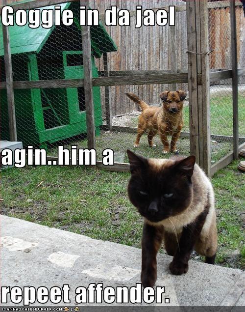 Goggie in da jael agin..him a repeet affender.
