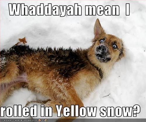 dogs,snow,what breed,what,yellow snow