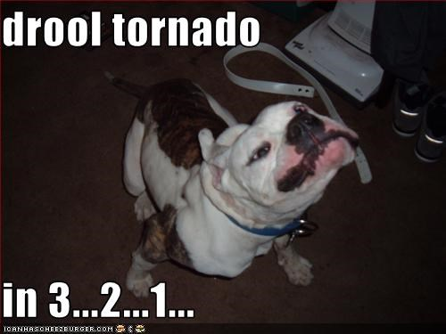 drool tornado  in 3...2...1...