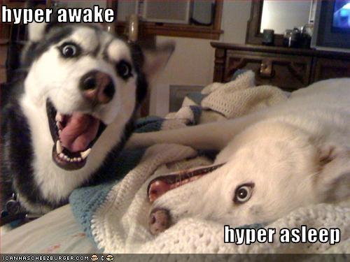 asleep,awake,Hall of Fame,husky,hyper,opposites,white