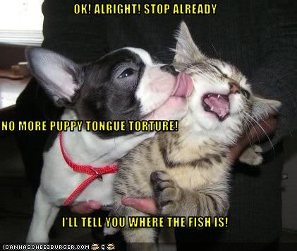 OK! ALRIGHT! STOP ALREADY NO MORE PUPPY TONGUE TORTURE! I'LL TELL YOU WHERE THE FISH IS!