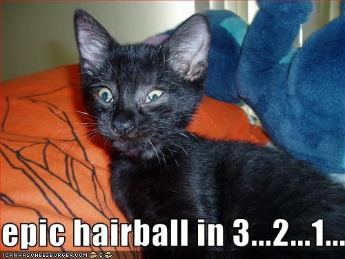 epic hairball in 3...2...1...