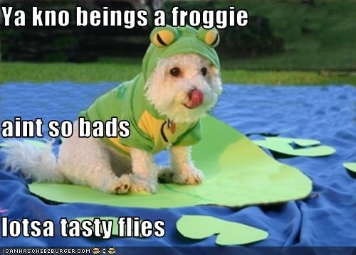 Ya kno beings a froggie aint so bads lotsa tasty flies