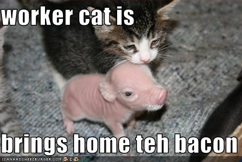 worker cat is  brings home teh bacon