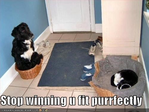 Stop winning u fit purrfectly