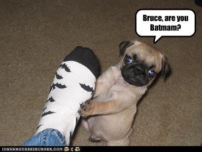 bat,batman,bruce wayne,Hall of Fame,pug,question,secret identity,socks
