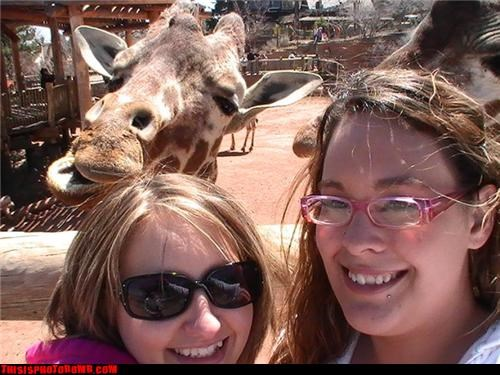 Animal Bomb,animals,awesome,giraffes,girls,zoo