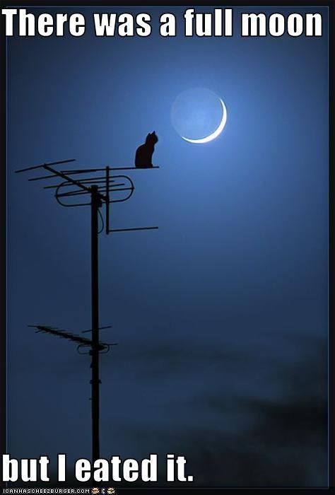 moon,nom nom nom
