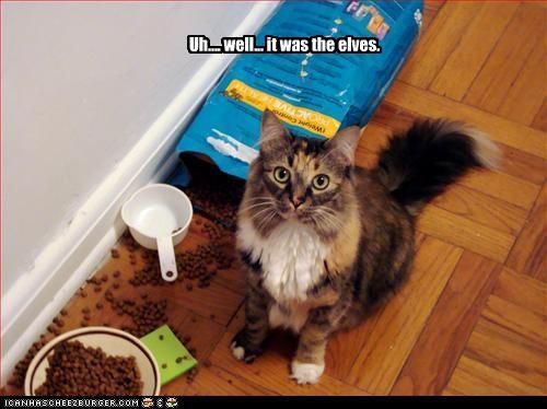 bad cat,elves,excuses,fud,lies,mess