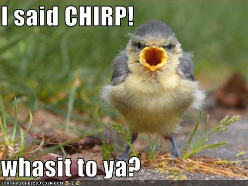 I said CHIRP!  whasit to ya?