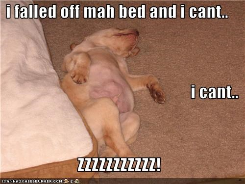 i falled off mah bed and i cant.. i cant.. ZZZZZZZZZZZ!