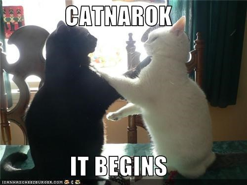 CATNAROK  IT BEGINS