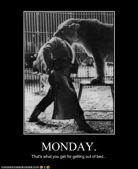 animal,bad day,circus,lion,photograph