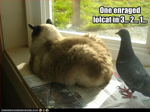 One enraged lolcat in 3... 2... 1...