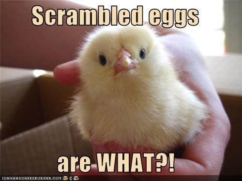 Scrambled eggs  are WHAT?!