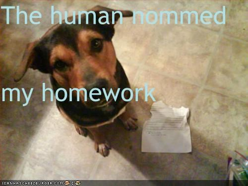 The human nommed  my homework