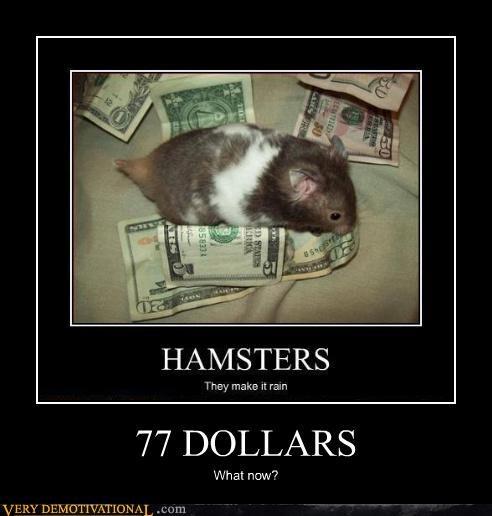 77 DOLLARS