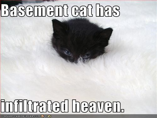 Basement cat has  infiltrated heaven.