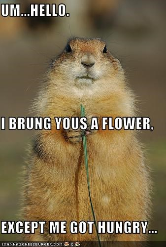 UM...HELLO. I BRUNG YOUS A FLOWER, EXCEPT ME GOT HUNGRY...