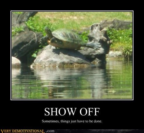One Showboating Turtle