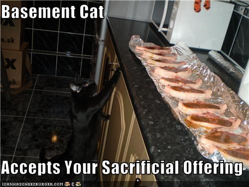 Basement Cat  Accepts Your Sacrificial Offering