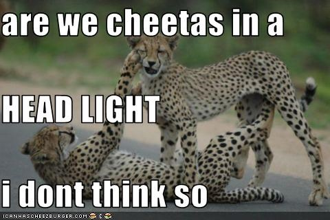 are we cheetas in a HEAD LIGHT i dont think so