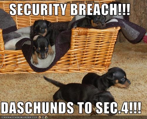 SECURITY BREACH!!!  DASCHUNDS TO SEC.4!!!