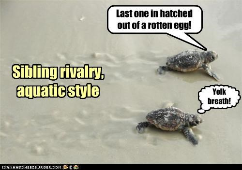 Sibling rivalry,aquatic style