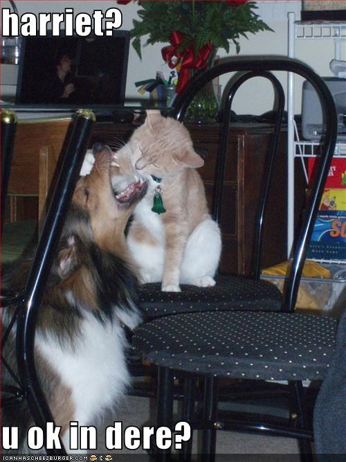 collie,eated,lolcats