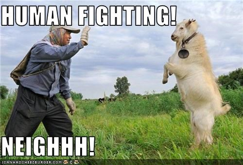 HUMAN FIGHTING!  NEIGHHH!