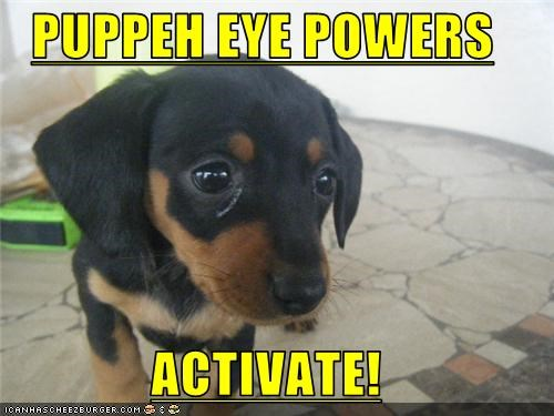 PUPPEH EYE POWERS  ACTIVATE!